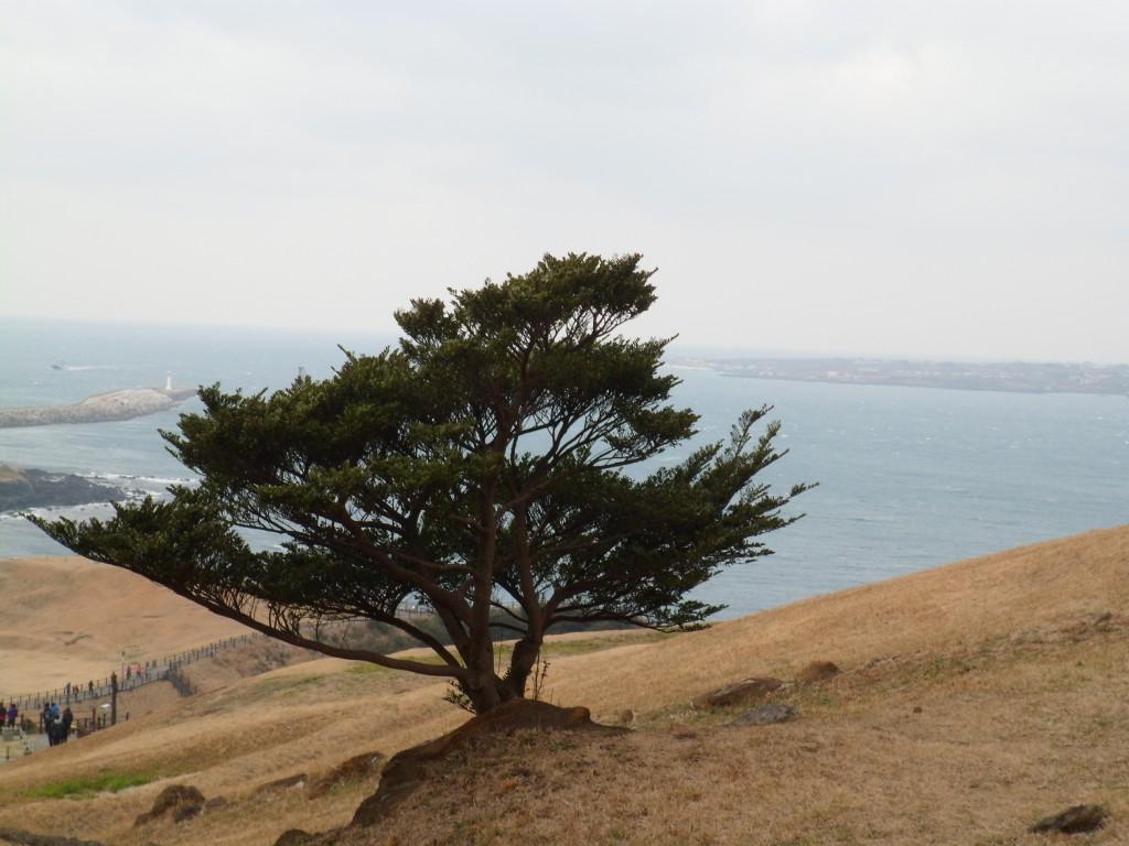 Ilha Jeju