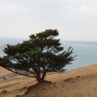 Jeju, Maravilha Natural e terra do amor. Será?