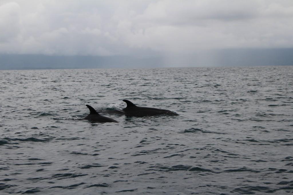 Os golfinhos do Parque Nacional Punta Ballena