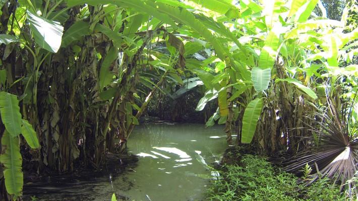 Conheça o Fervedouro, no Jalapão-TO