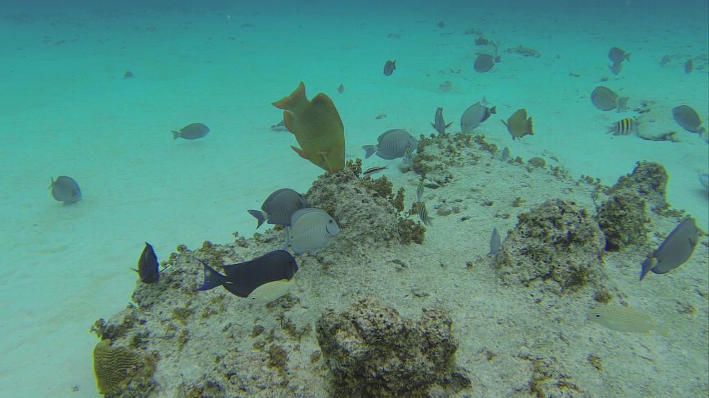 Peixes do Aquário Natural