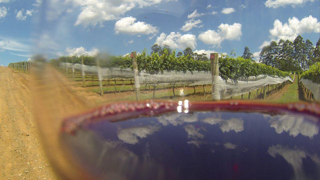 As parreiras, as uvas e o vinho na Vindima de São Roque