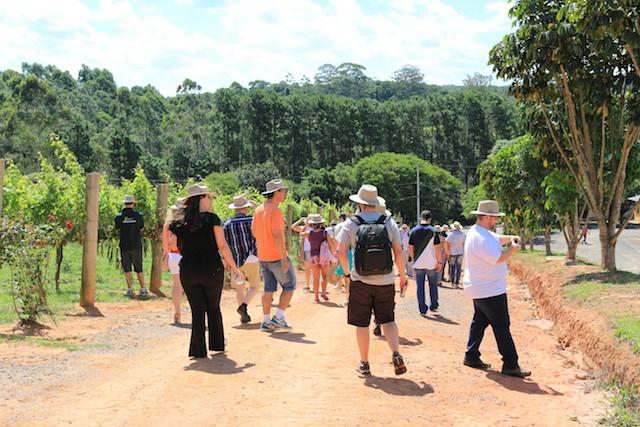Grupo se reunindo para degustar vinhos e ouvir histórias na Vindima de São Roque