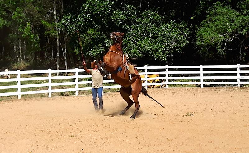 A apresentação com o cavalo é incrível!