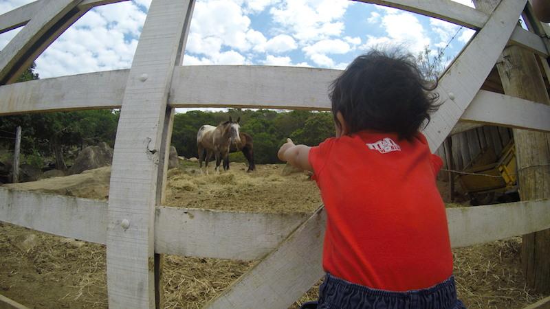 Os pequenos podem ver os animais de pertinho...